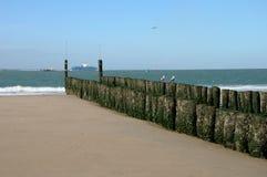 Doppia fila dei pali di legno, sviluppata con alga ed i balani Immagine Stock Libera da Diritti
