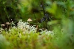 Doppingar i gräset Royaltyfri Foto