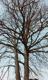 Doppio albero fotografia stock