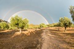 Doppio arcobaleno sopra un'azienda agricola verde oliva organica, Spagna Fotografia Stock