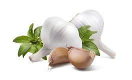 Doppio basilico dell'aglio isolato su fondo bianco Fotografia Stock