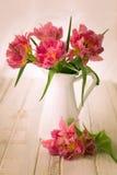 Doppio tulipano rosa della peonia immagini stock libere da diritti
