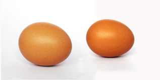 Doppio uovo del pollo fotografia stock