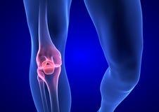 Dor do joelho O corpo humano azul 3D da anatomia rende no fundo azul Fotos de Stock Royalty Free
