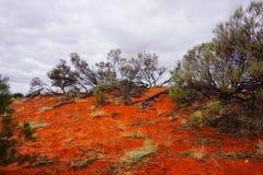 Dor Land, Roxy Downs, binnenland Zuid-Australië Stock Foto's