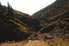 dor landschap met heuvels en valleien en een klein bos met grasrijke vlaktes in de voorgrond stock foto