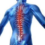 Dor traseira no corpo humano Foto de Stock