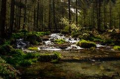 Dora flödande flod för vatten i en bergmiljö Berg med vatten Royaltyfri Bild