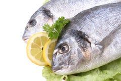 dorada鱼 免版税库存图片