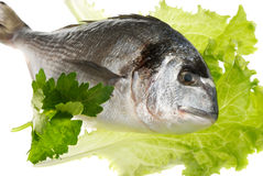 Dorada fish Royalty Free Stock Images