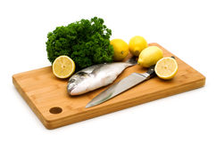 Dorada fish Royalty Free Stock Photography