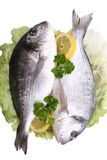 Dorada fish Royalty Free Stock Image