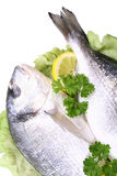 Dorada fish Stock Images