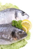 Dorada fish Stock Photo