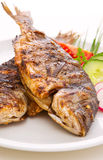 Dorada fish. Stock Image