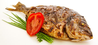 Dorada fish. Stock Photo