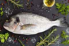 Dorada fish with herbs and spices on a dark background. Dorada fish gilt-head bream with herbs and spices on a dark background. Dorada, rosemary, thyme, oil royalty free stock image