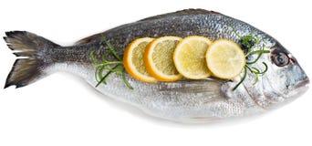 Dorada fish (Sparus aurata L.) Royalty Free Stock Photography