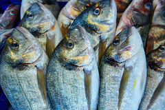 Dorada fish Sparus aurata from Mediterranean Stock Photo