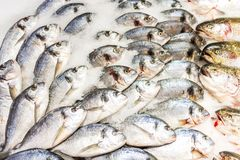 Dorada fish at the supermarket Stock Photos