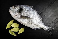 Dorada fresh fish next to some bay leaves on a black slate table. Dorada fresh fish next to bay leaves on a black slate table prepared for cooking royalty free stock photos