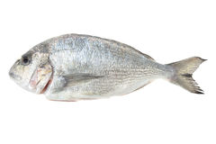 Dorada seafood isolated on white. Bream fish. Royalty Free Stock Photo