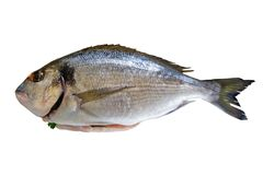 doradafisk Arkivfoto