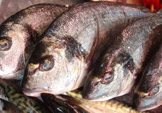 Dorade fish Royalty Free Stock Photography