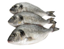 Dorade fish. Three raw dorade fish on white background Royalty Free Stock Photography