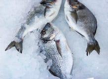 Dorade fraîche sur la glace froide 1 Images libres de droits