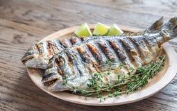 Dorade grelhado Royale Fish imagens de stock