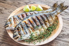 Dorade grelhado Royale Fish foto de stock royalty free