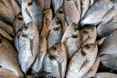 Dorade at the market. Gilded head sea bream at the market Stock Photo