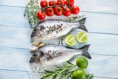 Dorade Royale Fish Royaltyfri Bild