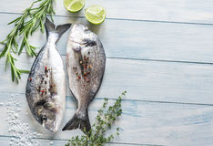 Dorade Royale Fish. On the wooden background Royalty Free Stock Photos