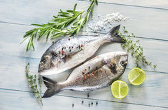 Dorade Royale Fish. On the wooden background Royalty Free Stock Images