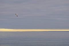Doradillo plaża w Puerto Madryn, Chubut zdjęcia stock