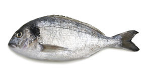 dorado鱼 免版税库存照片