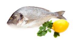 Dorado鱼 免版税图库摄影
