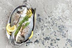 Dorado de los pescados frescos Pescados crudos del dorado con el limón y el romero Brema de mar o pescados del dorada Imágenes de archivo libres de regalías