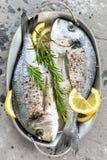 Dorado de poisson frais Poissons crus de dorado avec le citron et le romarin Dorade ou poissons de dorada Photos stock