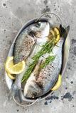 Dorado de poisson frais Poissons crus de dorado avec le citron et le romarin Dorade ou poissons de dorada Images stock