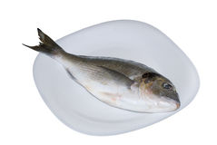 Dorado dei pesci di mare Immagini Stock Libere da Diritti