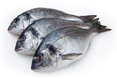 Dorado del pesce fresco su bianco Fotografia Stock Libera da Diritti