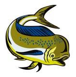 Dorado dolphin fish. Vector art of a Royalty Free Stock Photos