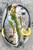 Dorado dos peixes frescos Peixes crus do dorado com limão e alecrins Sargo ou dorada Imagem de Stock