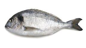 Dorado Fische Lizenzfreie Stockfotos