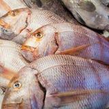 Dorado Fische Lizenzfreie Stockfotografie