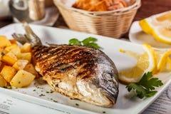 Dorado Fische Lizenzfreie Stockbilder