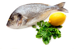 Dorado Fische Lizenzfreies Stockfoto